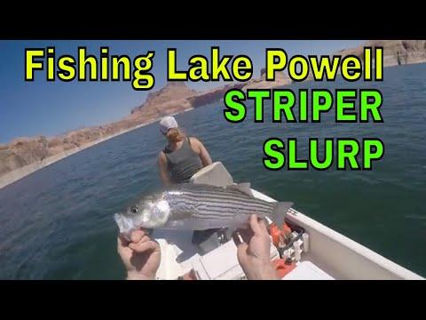 Fishing/Camping Lake Powell, June Striper Slurp and Smallmouth Bass Action