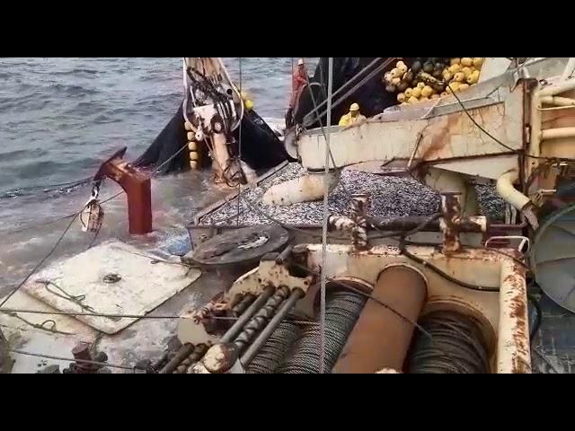 Embarcación JADRANKA B repleta de Anchoveta empezó a escorar