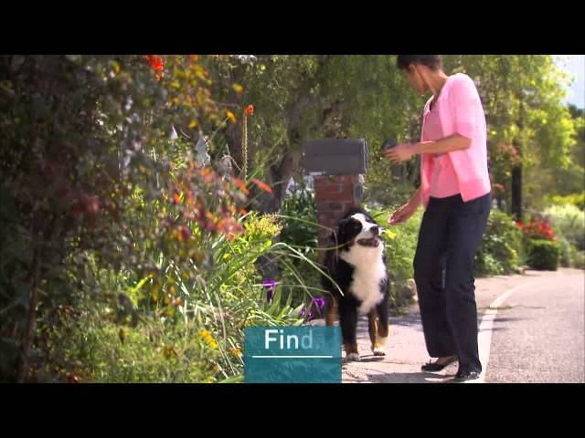 Protect Your Pet with Tagg GPS Pet Tracker
