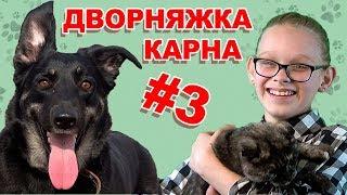 Дворняжки. WiKi Animals #3