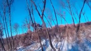 Охота на кабана 2016 (1) (первый кабан из под Шумки)