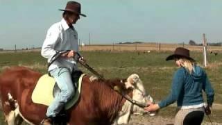 Faire du saut d'obstacles avec une vache...
