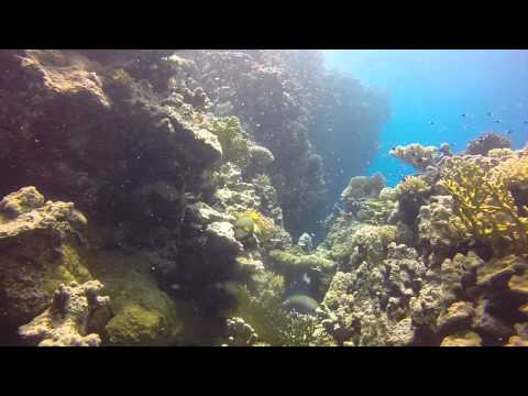 Southern Red Sea August 2015 Director's Cut