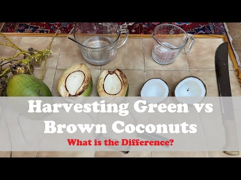 What is the difference between Green and Brown Coconuts?