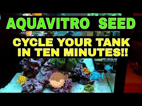 Aquavitro Seed - How To Cycle An Aquarium