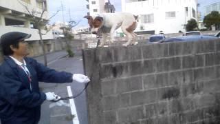 ブロック壁に飛び乗る犬.