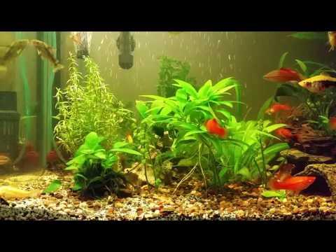 Aqua one 620t freshwater