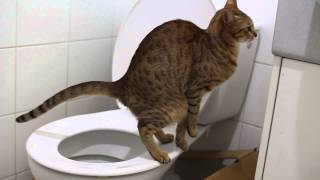My cat poops funny