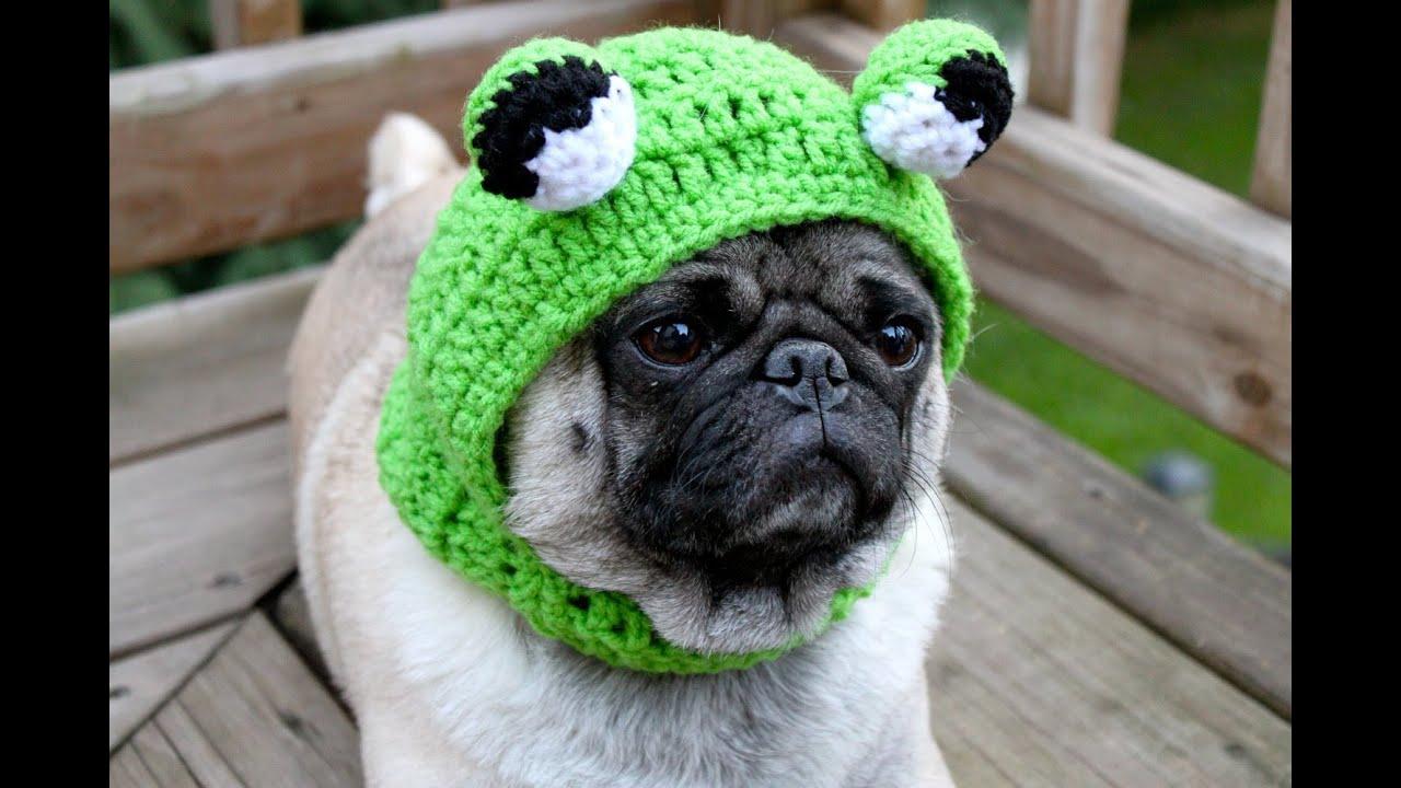 Мопс (Pug). Породы собак (Dog Breeds)