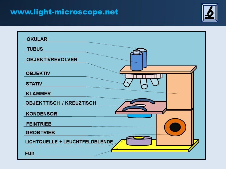 lichtmikroskop aufbau funktion mit erkl rungen youtube. Black Bedroom Furniture Sets. Home Design Ideas