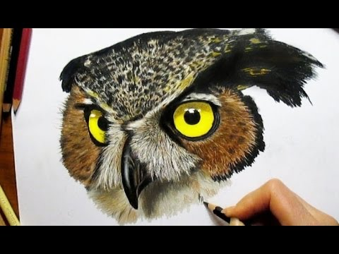 Colored Pencil Drawing Of An Owl - Speed Draw Jasmina Susak - YouTube