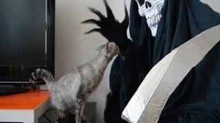 parodia la muerte se lleva a mi gato the death