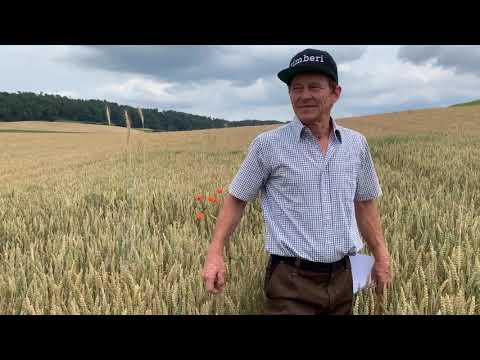IP-Suisse Getreide: Getreideanbau ohne Herbizide