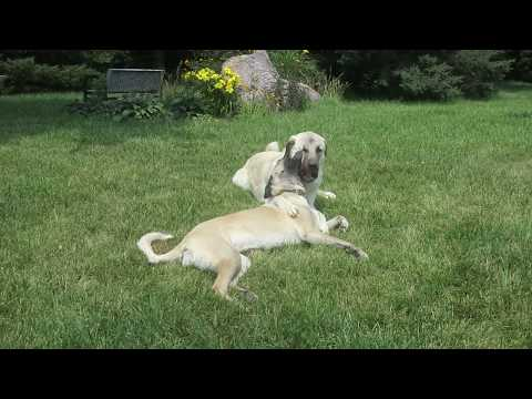 Buddy and Boomer being goofy