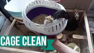 Gerbil Cage Cleaning