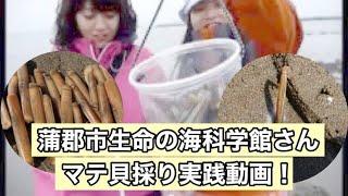 蒲郡市生命の海科学館主催のマテ貝掘り教室に参加してきました♪ マテ貝...