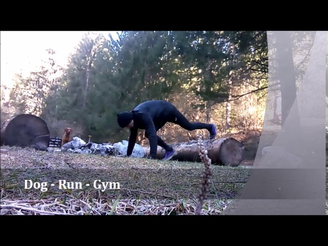 Dog Walk Gym