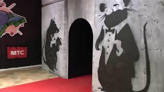видео Выставки Москвы