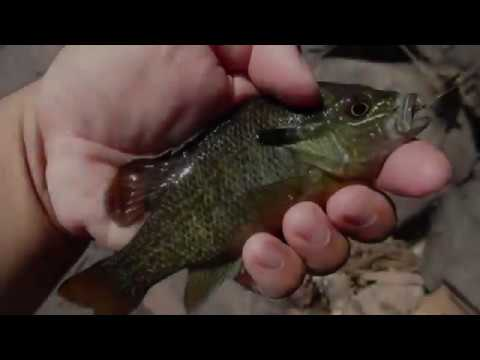 Neshaminy Creek MTB Unboxing+Slam!!! Panfish, May 2017! Newtown, PA★Bass fishing