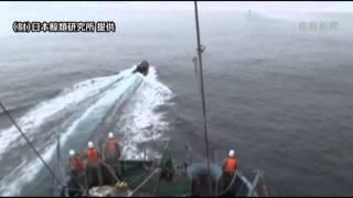 シー・シェパードが今期2度目の妨害行為 調査捕鯨船団に