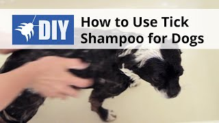 How to use Tick Shampoo for Dogs