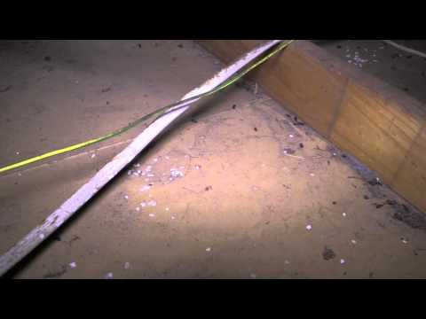 Rodent Damaged Electrical Wiring