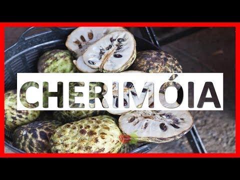 Os 12 Benefícios da Cherimóia Para Saúde   Dicas de Saúde