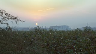 Pan shot of beautiful cotton field at the time of sunset in an Indian farm