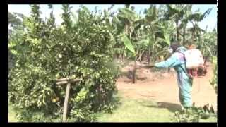 Smart Farming: How to make money from growing oranges