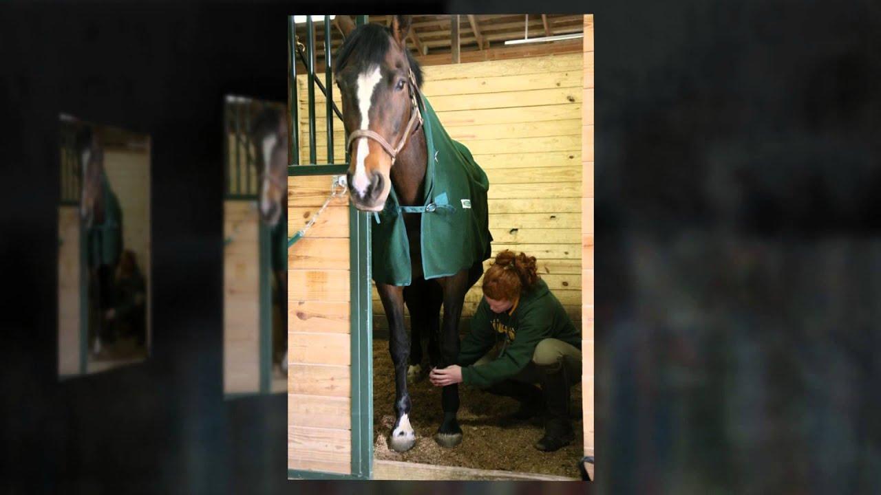 Lake Erie College Equine Studies Program Youtube