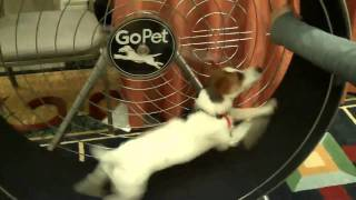 Product Review | Dfw Dog Training | Redeeming Dogs | Gopet Exercise Wheel