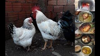 Tavuklarımız, Horozlarımız Ve Köy Fırınındaki Yemekler :)