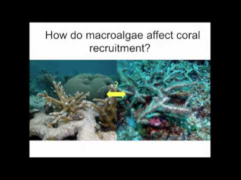 Valerie Paul - Chemical ecology of seaweed-coral-herbivore interaction on Caribbean reefs