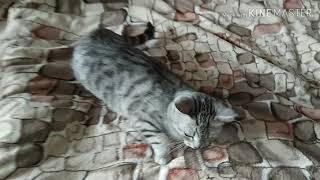 Как размазать кошку по кровати