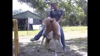 Heavy Girl riding small Pony