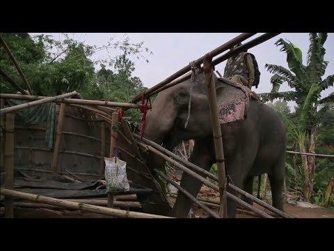 Слоны против нелегалов — как индийская полиция очистила заповедник от незаконных поселений