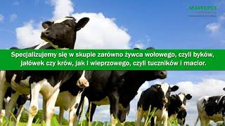 Usługi transportowe skup złomu zwierzęta hodowlane Siedlimowo Markopol