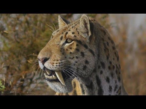 Вопрос: Какие млекопитающие оказались сильнее в борьбе за существование?