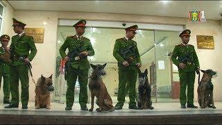 Triển khai chó nghiệp vụ trong công tác tuần tra an ninh trật tự theo Mệnh lệnh 01 | Camera 141