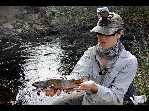 Rubicon River Brook Trout MAYHEM