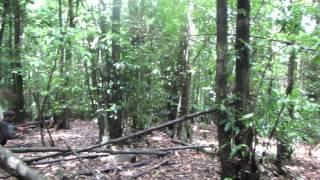 【カンボジア】アオラル山山頂の景色(標高1813m)