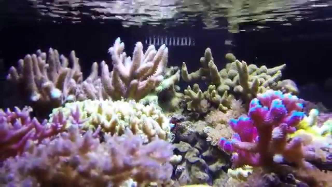 Aquarium récifal eau de mer Reef tank 280 L 75 G (20 mois ...