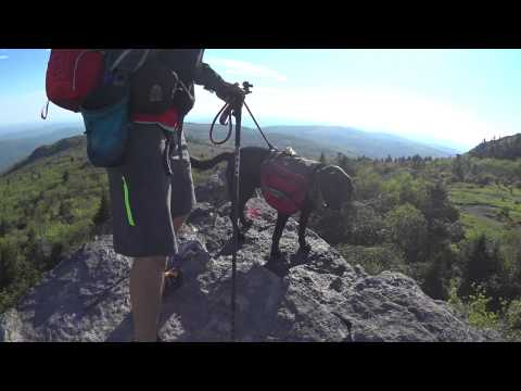 Blind hiker Trevor Thomas and guide dog, Tennille hiking in VA