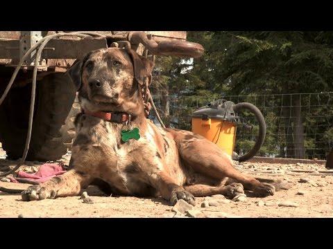 Meet the Kilcher Family Dogs   Alaska: The Last Frontier