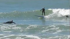 Surfing Venice, Florida 12-27-2012