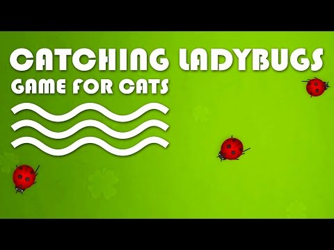 CAT GAMES ON SCREEN - Catching Ladybugs! Entertainment Video
