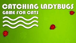 ENTERTAINMENT VIDEO FOR CATS. Cat Game on Screen. Catching Ladybugs.