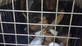 Казачка-Собаки в колодце,очередная человеческая жестокость.