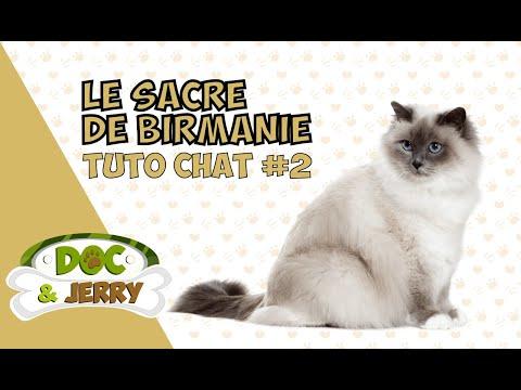 LE SACRE DE BIRMANIE : TUTO CHATS #2 ?!?!?!?