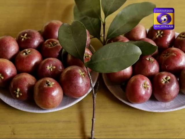 Fruit Cultivation in Kerala